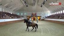 Invitation à la danse avec l'Ecole royale andalouse d'art équestre