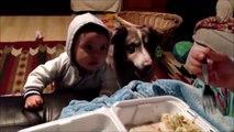 Quand tu essaies de faire parler bébé mais que c'est ton chien qui sort ses premiers mots... mama!!!!