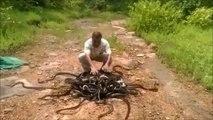 Il libère des centaines de serpents d'un seul coup... Flippant