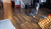 Rendre fou son chat avec des boules de neige ? GO !