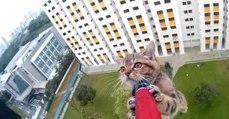 Gatinho é salvo após ficar preso no parapeito do 12º andar de um prédio em Singapura