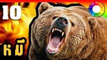 10 อันดับ  สายพันธุ์ หมี สุดยอดสัตว์สุดน่าทึ่งของโลก !!!  Double Colour