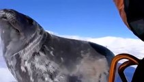 This pup cries and learns to swim under the ice