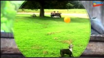Best Video Funny Moments with Pets. Dog, Cat, Monkey, Horses and  birds