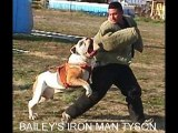 AMERICAN BULLDOGS ...THE REAL DEAL