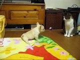 ☆「チャイvs猫のカギッポ」*French bulldog フレンチブルドッグ*