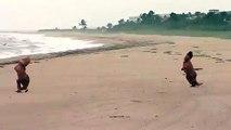 T-Rex sur la plage pendant l'ouragan Matthew en Floride... Les fous !