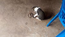 Cat vs Snake look like a cat playing Snake Funny Cat Videos..mp4