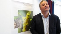 Bourgogne : un millésime 2016 bon mais cher