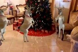 Funny Video Rusa srigala goyang patah patah