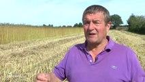 Agriculture : La culture du chanvre se développe (Vendée)