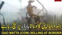 Hindus are selling their Gao Matta at Bangladesh Border ہندو بنیا اپنی گائو ماتا کو