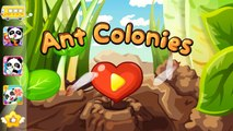 Ant Colonies Learn workers, soldiers, and the queen ants by Baby Bus, game for Baby or Toddlers