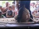 Transhumance Die 2007 tonte du mouton