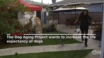 Esperti ricercatori trovano un farmaco che permette ai vostri animali di vivere più a lungo