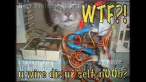 Compilation de photos de chats marrantes