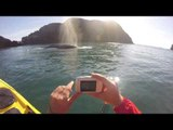 Gray Whale Surprises Paddlers Off the Coast of Oregon