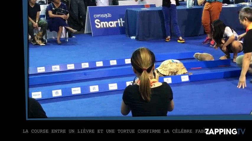Une vraie course entre un lièvre et une tortue confirme la fable de la Fontaine (Vidéo)