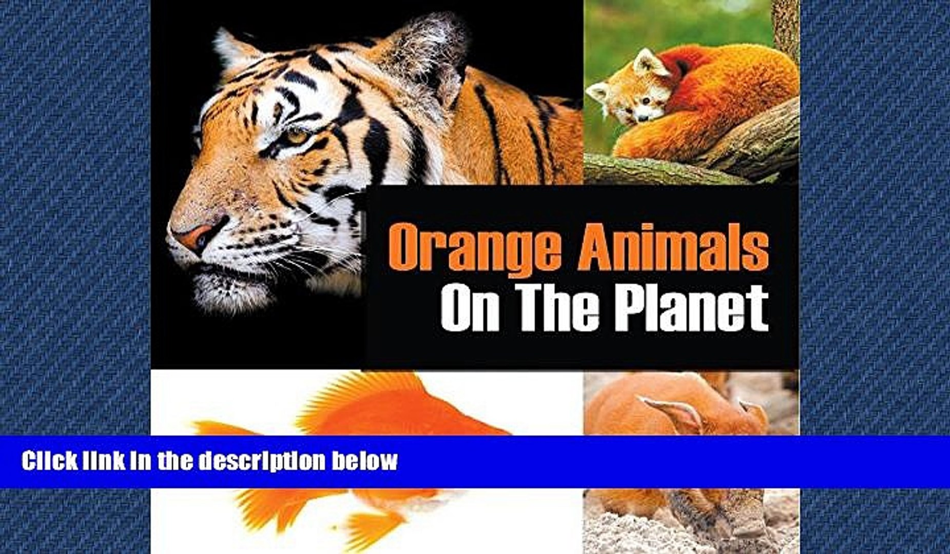 Online eBook Orange Animals On The Planet: Animal Encyclopedia for Kids (Colorful Animals on the