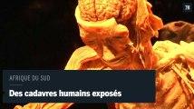 En Afrique du sud, des cadavres humains exhibés dans un musée.