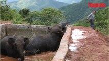 Chine: trois éléphants pris au piège dans un réservoir d'eau