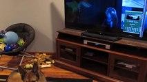 Ce berger allemand hurle avec les chiens d'un dessin animé - zootopia