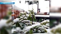 Alpes du Sud / Météo : premières images de chutes de neige_V2