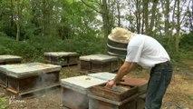 Crise apicole : Rencontre avec Julien Delaunay (Vendée)