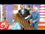 Club Dorothée : un tigre se jette sur Dorothée ! (1997)