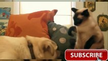 Animale Cat Vs Dog - You Shall Not Pass, Dog