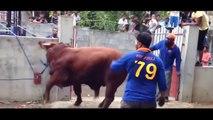 New Qurbani, funny Qurbani, funny Video,cow qurbani latest 2016