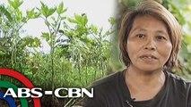 Tapatan Ni Tunying: Farm In the City