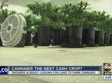 Growers looking for Arizona land to farm cannabis