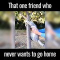 Party Animal : That friend who never wants to go home - Amazing animals,