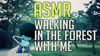 No Talking ASMR : Walking in The Urban Forest with Thomwhat (Binaural Forest sound) 톰왔 등에 업혀 도심숲길 산책하기