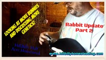 Rabbits - Overdue Rabbitry Update Part 2 More Rabbits and More Rabbit Genetics.mp4