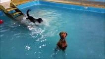 Cette piscine est reservée au chiens! Piscine canine à Charleroi en Belgique
