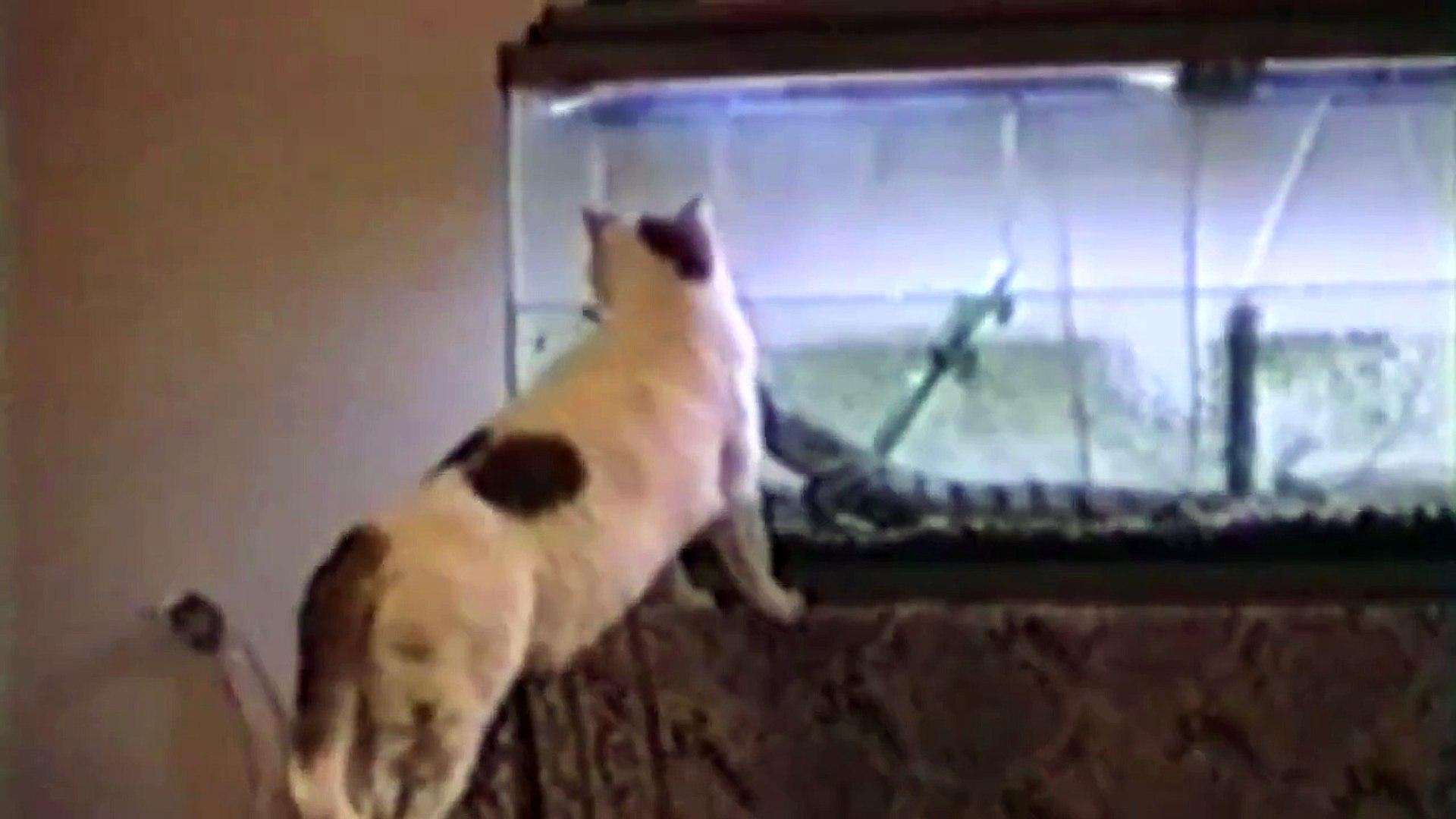 Funny videos 2016 : Cute Cats