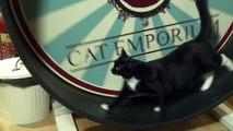 Il crée un album insolite pour apaiser les chats
