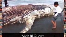 Most amazing 100 Feet Long creature found at Karachi Sea