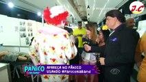 PROGRAMA PANICO NA BAND 16_10_2016 PT 1-PROGRAMA PANICO NA BAND 16_10_2016 PT 1