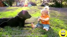 Funny Videos - Babies Laughing at Dogs - Cute dog & baby compilation