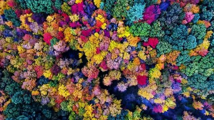 Drone Video Shows Beauty of New Hampshire Fall Foliage