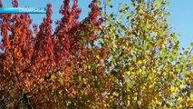 D!CI TV : les Alpes du Sud aux couleurs de l'automne