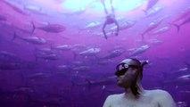 Un apnéiste au milieu dun banc de thons