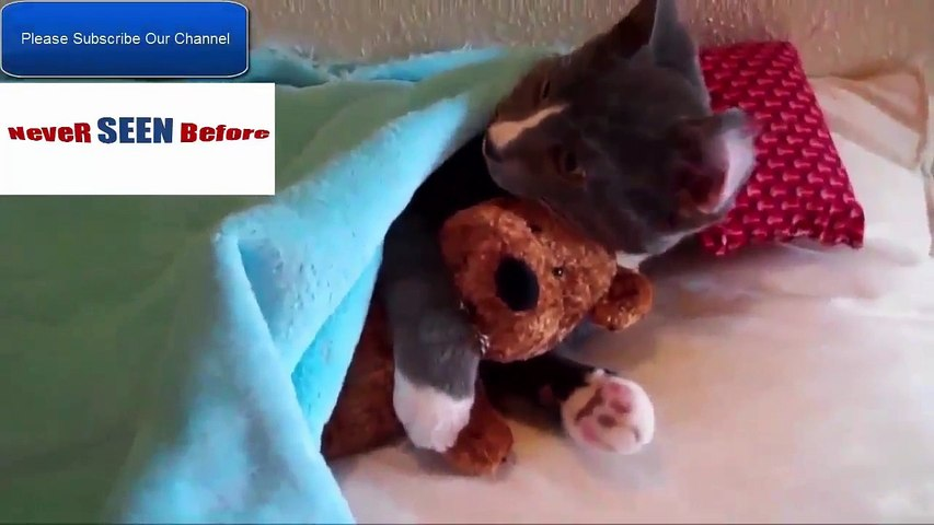 Very Funny Cat Videos That Make You Laugh - Very Funny Cat Videos