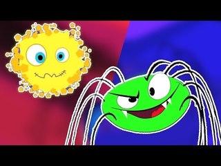 incy wincy spider | vidéo éducative | rimes populaires pour les enfants | Incy Wincy Spider