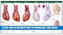 Read Now Anatomical Chart Company s Illustrated Pocket Anatomy: Anatomy of The Heart Study Guide