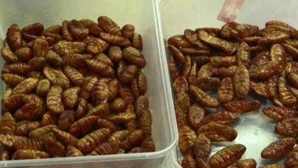 La UE importará insectos de consumo humano procedentes de Tailandia
