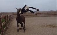 Un cheval joue avec un cheval... en peluche !